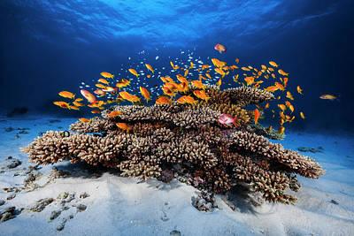 Coral Reefs Photograph - Marine Life by Barathieu Gabriel