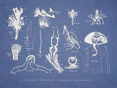 Organism Wall Art - Digital Art - Marine Organisms Hydromedusae by Aged Pixel