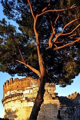 Photograph - Italian Stone Pine by Fabrizio Troiani