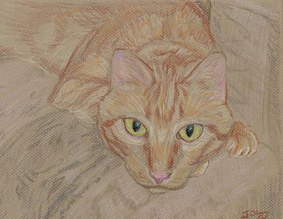 Orange Tabby Drawing - Mariusz Gaze by Jeffrey Oleniacz