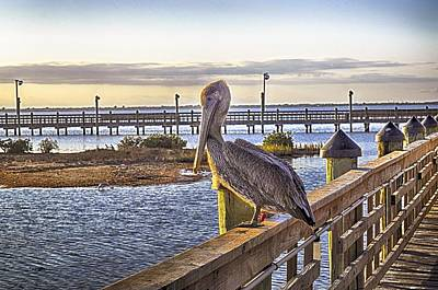 Photograph - Marker 37's Brown Pelican by Kristina Deane
