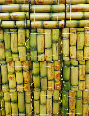 Photograph - Market Sugarcane by Kurt Van Wagner