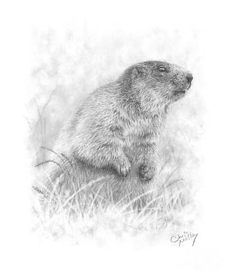 Drawing - Marmot by Chris Mosley