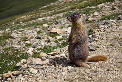Fun Patterns - Marmot Overlook by Colin Davis