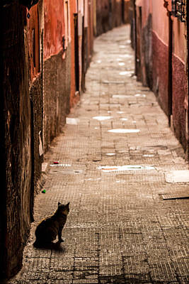 Photograph - Marrakech Cat by Justin Albrecht