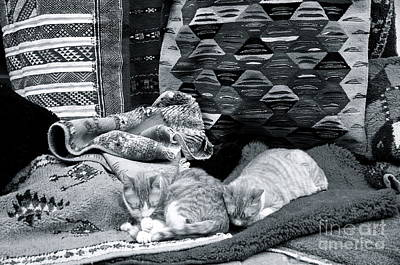 Photograph - Marrakesh Cat V by Louise Fahy