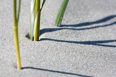 Sand Dunes Photograph - Marram Grass Pattern by Jan Brons