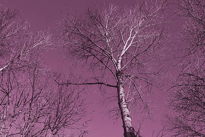 Winter Trees Mixed Media - Mauve Trees by Bonnie Bruno