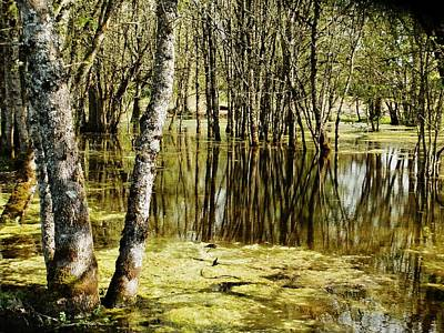 Photograph - Marsh At Cheadle Lake by VLee Watson