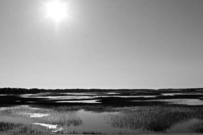 Photograph - Marsh Beauty by Jessica Brown