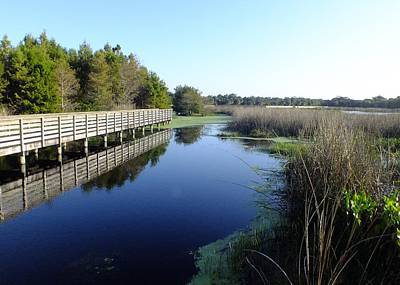 Photograph - Marsh Boardwalk by Peggy King