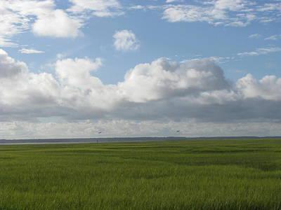 Photograph - Marsh Grass And Birds by Ellen Meakin