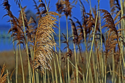 Photograph - Marsh Grass At Northside Park by Bill Swartwout