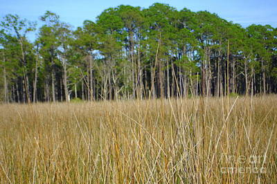 Photograph - Marsh Grass In Winter by Lew Davis