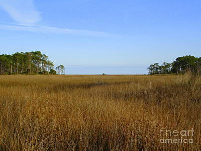 Photograph - Marsh Grass by Lew Davis