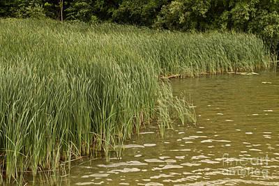Photograph - Marsh Grass by William Norton