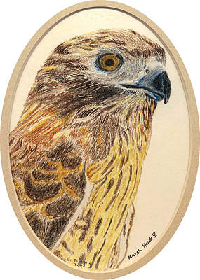 Painting - Marsh Hawk by Linda Feinberg