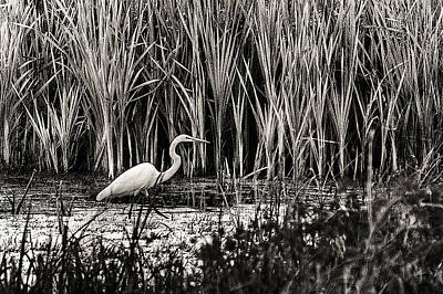 Photograph - Marsh Hunter by Scott Hansen