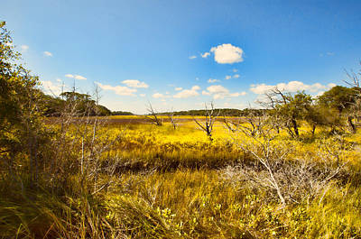 Photograph - Marsh In Summer by J Riley Johnson