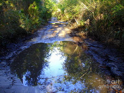 Photograph - Marsh Road After A Rain by Lew Davis