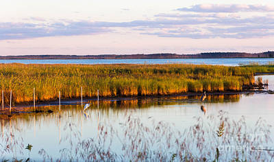 Photograph - Marsh Sunset by Ursula Lawrence