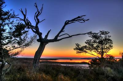 Marsh Tree Sunrise Art Print