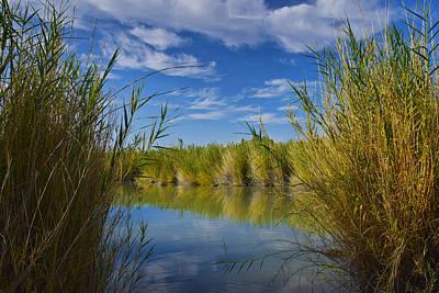 Photograph - Marsh Window by Skip Hunt