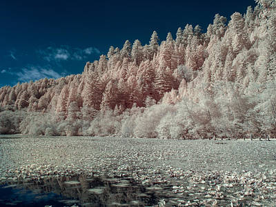 Photograph - Marshall Pond In Infrared by Greg Nyquist