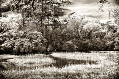 Brown Tones Photograph - Marshes by John Rizzuto