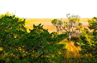 Photograph - Georgia Coastal Marsh And Cedar Tree by Ginger Wakem