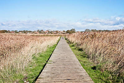 Marshland Path Art Print