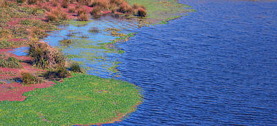 Photograph - Marshy  by Brent Dolliver