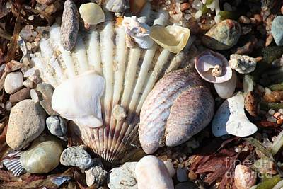 On Trend At The Pool - Shells along the Seashore by Carol Groenen