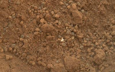 Martian Soil, Curiosity Image Art Print by Science Photo Library