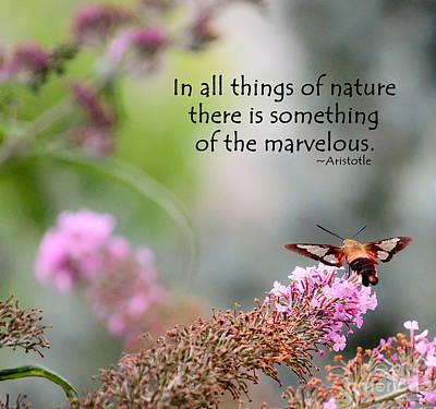 Thomas Kinkade - Marvelous Nature by Kerri Farley