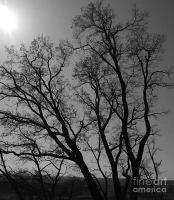 Photograph - Maryhill Tree Bw 4a by Chalet Roome-Rigdon