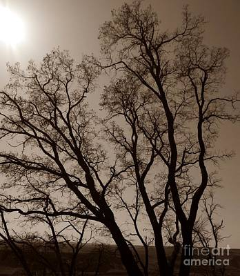 Photograph - Maryhill Tree Sepia  by Chalet Roome-Rigdon
