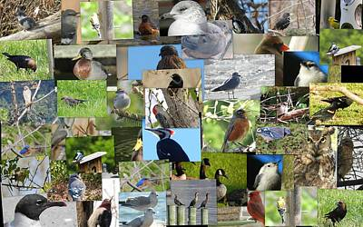 Photograph - Maryland Birds by Tom Ernst