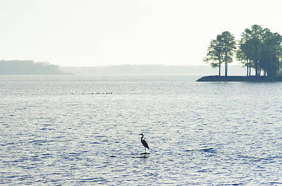 Blue Herron Photograph - Maryland's Chesapeake Bay by Bill Cannon