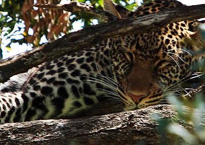 Photograph - Masai Mara Leopard  by Aidan Moran