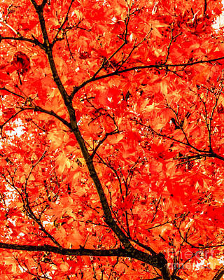 Photograph - Mass Of Maple by Silken Photography