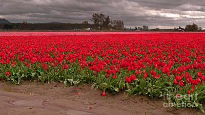 Photograph - Massive Red And Pink Tulip Fields  by Valerie Garner