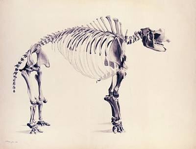 Peale Photograph - Mastodon Fossil Skeleton by American Philosophical Society