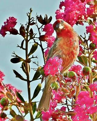 Photograph - Matching Colors - Red Bird by Kim Bemis