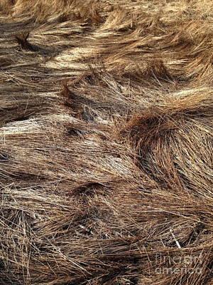 Photograph - Matted Grass by Mark Messenger