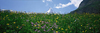 Mix Flowers Photograph - Matterhorn Switzerland by Panoramic Images