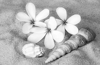 Shells Photograph - Maui Beach Treasures Bw by Susan Candelario