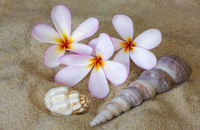 Shells Photograph - Maui Beach Treasures by Susan Candelario