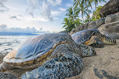 Photograph - Maui Daydreams by Hawaii  Fine Art Photography
