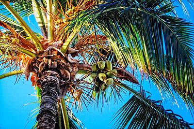 Photograph - Maui Palm by Lars Lentz